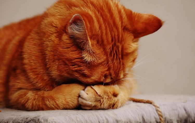 cat-1675422_1920.jpg