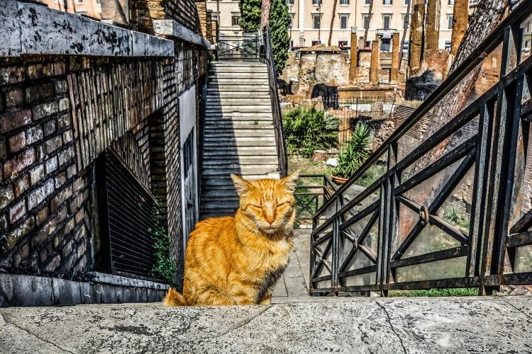 cat-2482780_1280